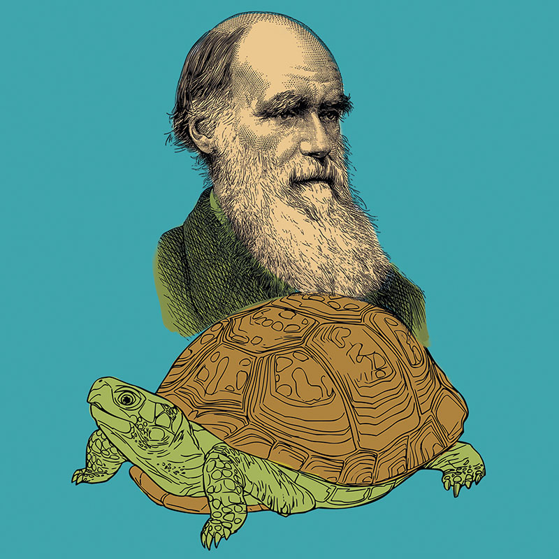 TEATRAM. TEATRE CIRC: LA TORTUGA DE DARWIN